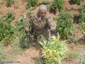 Authorities uncovered more than $1 billion worth of pot plants in Sequoia National Forest this week.