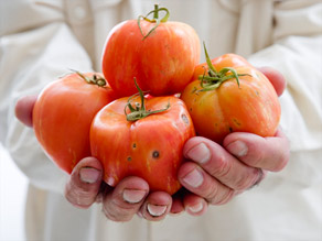 A diet rich in lycopene -- found in tomatoes, watermelon and  pink grapefruit -- protects against prostate cancer.