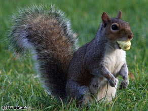 Does this small creature terrify you? You might have sciurophobia - the fear of squirrels.