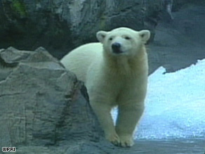 The mayors' proposal requests a $4.8 million polar bear exhibit at the Providence, Rhode Island, zoo.