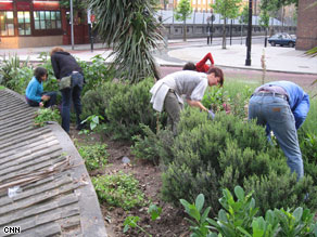 Guerrilla gardeners cultivate what was once a patch of derelict land in London.