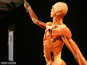 The bodies on display are plastinated, a process that replaces bodily fluids and fat with plastic.