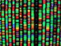 Designer DNA