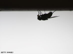 New research shows flies rapidly calculate an escape route once they spot a swatter.