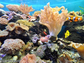 Coral reefs could be wiped out in 30-40 years according to a new report.