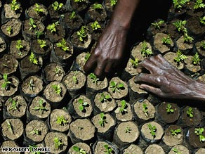 Tree planting is one of the favorite ways to carbon offset. How much can we believe in it?