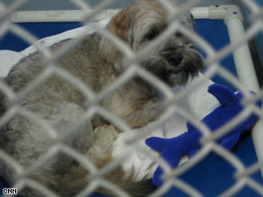 This dog was abandoned when his family lost their home to foreclosure, officials say.