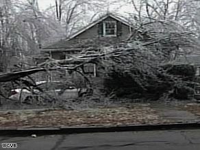 This week's ice storm felled many trees in Boston and elsewhere across Massachusetts.
