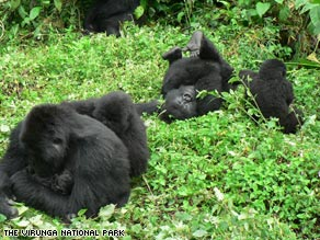 A baby rides her mother in Virunga National Park, home to 200 of the world's 700 mountain gorillas.