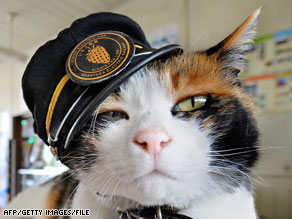 "Tama the ""Super Stationmaster,"" in her hat cocked at a rakish angle, has become a sensation."