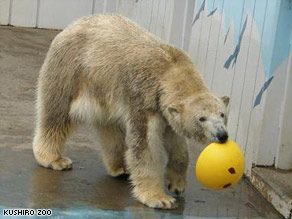 A 4-year-old polar bear sent to impregnate a female polar bear at a zoo in Kushiro was found to be female as well.