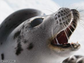 Harp seals are among the mammals under threat, according to the latest IUCN Red List.