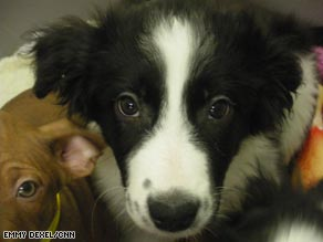 UK dog centers are at bursting point as growing numbers of animals need re-homing.