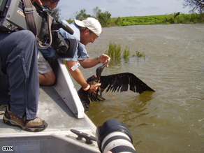 Plaquemines Parish's Coastal Management Director PJ Hahn cleaning the distressed bird.