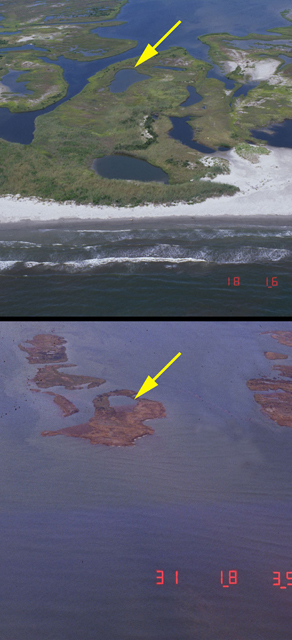 Northern Chandeleur Islands, 60 miles east of New Orleans: before and after Hurricane Katrina. Storm surge and large waves from Hurricane Katrina submerged the islands, stripped sand from the beaches, and eroded large sections of the marsh. Today, few recognizable landforms are left on the Chandeleur Island chain