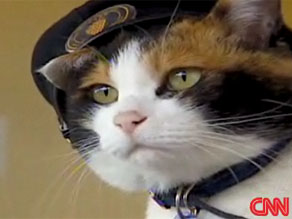 Tama the cat, in her conductor&#039;s hat.