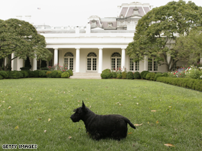 The Obamas are debating what dog will succeed Barney as the White House pet.