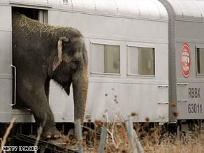 A Ringling Bros. circus elephant steps out of a train and onto a wooden ramp in this file photo.