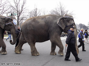 Ringling Bros. and Barnum &amp; Bailey elephants pass the U.S. Capitol in a parade this week in Washington.