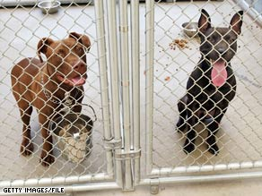 The Supreme Court will hear a case on dogfighting, which usually involves pit bulls, shelter statistics say.