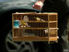 Police seized cash, canaries, finches and bird cages from a home in Shelton, Connecticut.