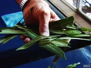 These oleander bush leaves, toxic to horses, were found in a San Diego, California, stable.