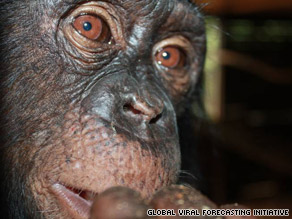 Researchers compared malaria DNA from infected chimps in Cameroon and Ivory Coast with human malaria.