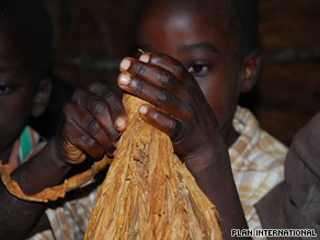 Children handle tobacco leaves with their bare hands, exposing them to high levels of nicotine.