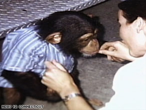 Travis, seen here as a younger chimp, was fatally shot by police after attacking a woman, authorities say.