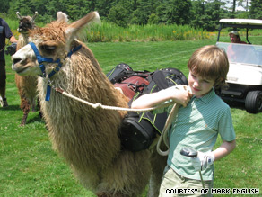 Llamas are excellent pack animals and highly sociable.