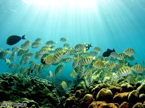 The new designated areas make up the largest area of ocean set aside for marine conservation in the world.
