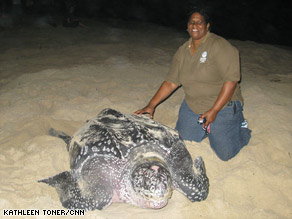 Baptiste's efforts in saving leatherbacks have contributed to her community's thriving eco-tourism industry.