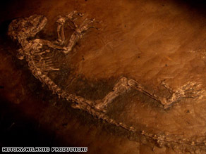 The fossil is believed to be an ancestor of monkeys, humans and other primates.