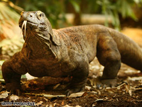 Researchers say the Komodo dragon has venom that keeps blood from clotting around its prey's wounds.