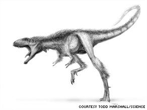 Scientists estimate the Raptorex weighed almost 100 times less than an adult Tyrannosaurus rex.
