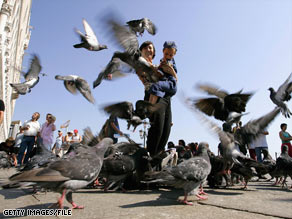 Feeding pigeons is illegal in Venice, Italy, and could earn you a fine.