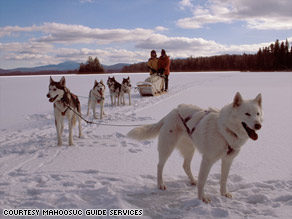 Mahoosuc Guide Service's Yukon Huskies take a break from pulling the sled.