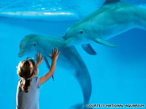 Zoos and aquariums offer kid-friendly and relatively inexpensive ways to commune with creatures.