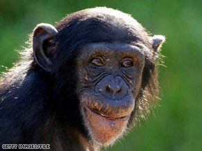 New Iberia Research Center cages about 325 chimps on its 100 acres. It also has about 6,000 monkeys.