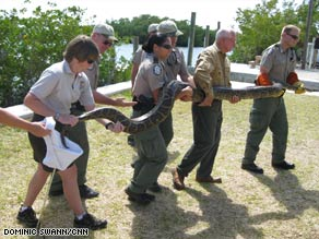 Members of the Python Patrol show off a giant snake that stretched more than 20 feet.