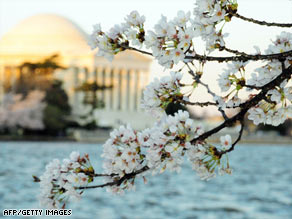 The annual two-week National Cherry Blossom Festival runs through April 12.