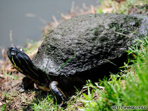 A biologist says that wherever he can get it, he'll take money to protect turtles from a killer stretch of road.