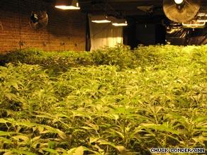 Lee owns a medical marijuana dispensary, a coffee house, and an indoor marijuana plantation.