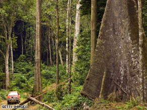 Trees in undisturbed tropical forests are soaking up more CO2 than people realized.