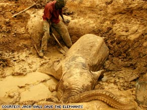 A young man helps an infant elephant drink in a last-ditch effort to save its life.
