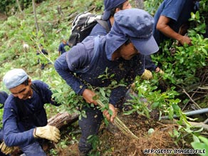 Workers help eradicate coca plantations in northwest Colombia in May.