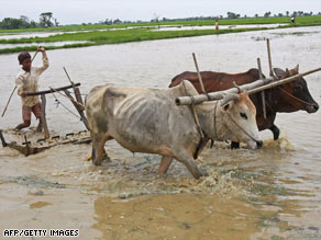 A young farmer ploughs a field in preparation to grow rice in Dalla, about 20 kms south of Yangon on July 9, 2008.