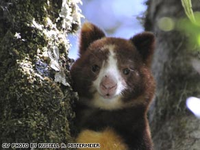 Papua New Guinea's endangered tree kangaroos will benefit from the protection of their habitat.