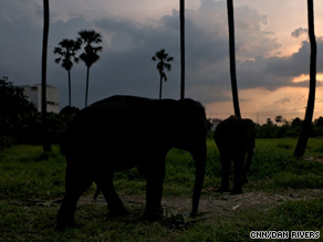 More than 100 elephants are on the streets of Bangkok. Some seem distressed.