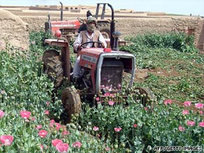 An Afghan police officer digs up a field of opium poppies in April.